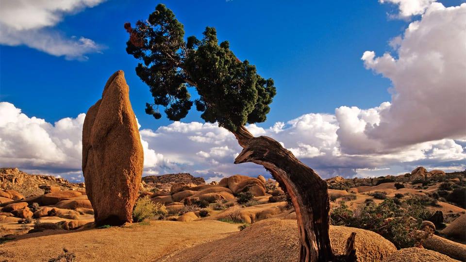 پارک ملی درخت خنجری