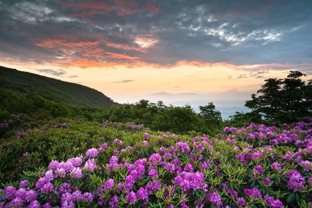 پارک ملی شنندوا