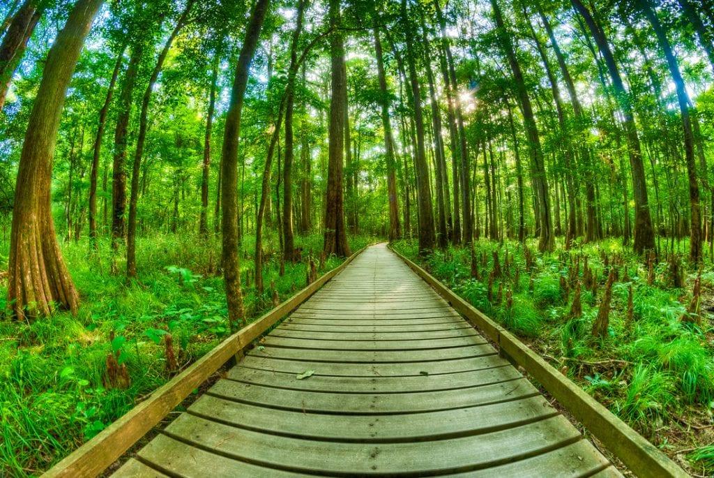 پارک ملی کانگری